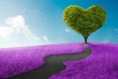 camino-del-amor-lavanda-árbol-en-forma-de-corazón-14-de-febrero.jpg (847×565) love