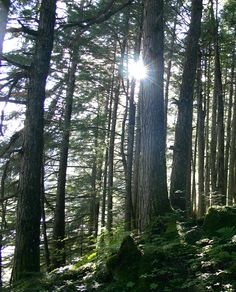 See the forest for the trees. #alaska