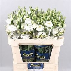 <p>  LISIANTHUS DOUBLE ROSITA WHITE (EX) is a tall White cut flower with multiple bell shaped flowers. Approx. 75cm & wholesaled in Batches of 10 stems. Very popular for wedding flowers and flower arrangements.</p>