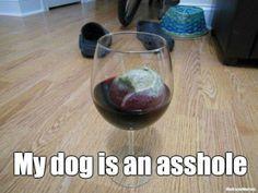 "My dog  www.LiquorList.com ""The Marketplace for Adults with Taste!"" @LiquorListcom   #LiquorList.com"