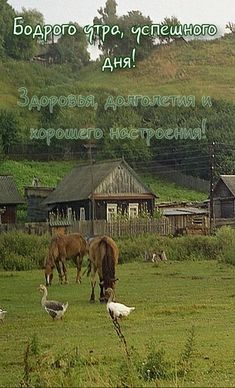 Good Morning, Horses, Animals, Bom Dia, Nice Weekend, Nice Asses, Animales, Buen Dia, Bonjour
