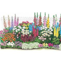 Endless Bloom Perennial Garden Includes planting diagram. So easy.