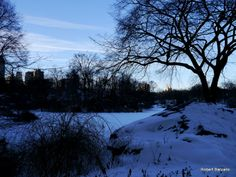 Winter 2014, The Pond, Central Park, NYC