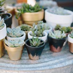 quickly paint terra cotta pots in cute colors