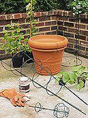 Vine Trellis in a Pot Coat hangers anchor a tomato cage for this useful and pretty trellis.
