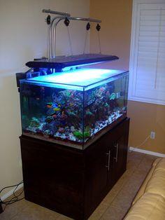 Do It Yourself – An Inexpensive (Light) Hanger Kit Diy Aquarium, Aquarium Aquascape, Aqua Rooms, Fish Stand, Fish Tank Lights, Led Aquarium Lighting, Saltwater Tank, Hanging Lights, Light Fixtures