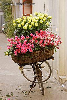 yellow-n-pink-flower-bike-1.jpg asia, bicycles, bikes, flowers, hanoi, images, pink, vertical, vietnam, yellow
