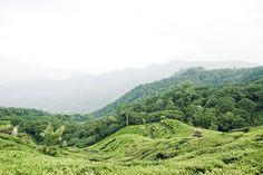 South India, Kerala, Munnar