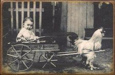 A vintage picture of rooster cart and baby...sooooooo want to do this!!!!!