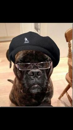 Samuel l jackson - dog lookalike illusion - follow me on Instagram @illusioncrazy