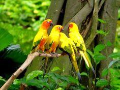 sweet parrot - Pesquisa Google