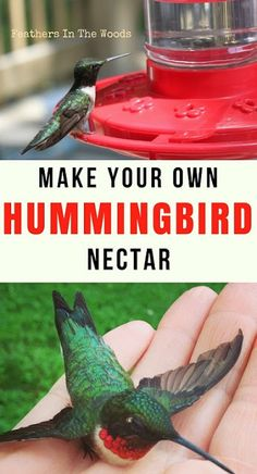 How to make hummingbird nectar. Homemade hummingbird nectar is more natural and better for the birds then the type with the red dye.