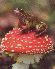 Les Reptiles, Reptiles And Amphibians, Sapo Frog, Frog Pictures, Rabbit Cages, Mushroom Fungi, Cute Frogs, Nature Aesthetic, Frog And Toad