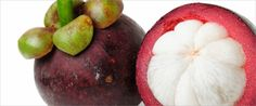 The Mangosteen | XANGO