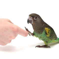 Bird Body Language 101 -- discover what parrots know and what they are saying by learning their body language.