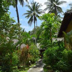 タイのクラビでジャングルリゾート。 A jungle resort at Krabi in Thailand! (2018.10.6) #thailand #jungle #resort #krabi #travel #jungleland #resortwear… Plants, Ideas, Plant, Thoughts, Planting, Planets