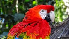 D&D Mundo Afora: Foz do Iguaçu (PR) - Parque das Aves