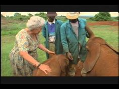 The heart of God is so beautifully portrayed in His creation. Woman Has Devoted Her Live To Rearing Orphan Elephants