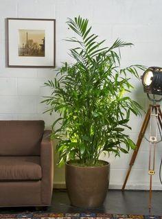 Plants to Improve Indoor Air Quality - Bob Vila's Blogs