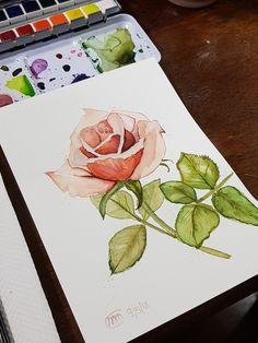 Rose Watercolor Flowers, Rose, Art, Pink, Roses, Flower Watercolor, Kunst, Art Education, Pink Roses