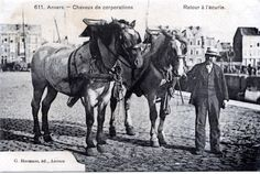 draft horses and the port of Antwerp cars