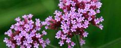 6 de las mejores plantas medicinales para cultivar en el hogar