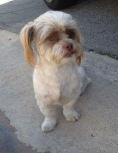 "LA MIRADA, CA - FOUND DOG, PLEASE SHARE!!! @Brittany Horton Ryan Viola posted: ""Found this dog 4/23/14 no tags no chip found on la Mirada and Rosecrans."" CONTACT https://www.facebook.com/BrittanyRyanViola"