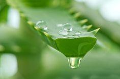 Sağlık iksiri aleo vera suyu evde nasıl yapılır?