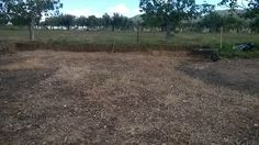 Zona de la parcela donde extraje la tierra (más de 15 m3., y de manera manual) que posteriormente he utilizado para abrigar las Ficus Carica en su base. Area of the plot where I extracted the land (more than 15 m3., And manually) I later used to house the Ficus Carica at its base.