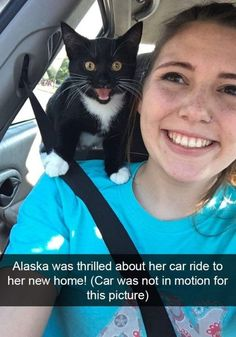 Funny Snapchats Cat Pictures Funnyfoto | Funny Pictures - Videos - Gifs - Page 4