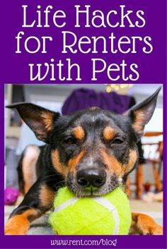 Are you renting with pets? Try using some of these life hacks to keep your apartment a fun and stress-free environment for you and your furry friends! | Living In An Apartment