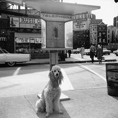 1968 © Vivian Maier/Maloof Collection