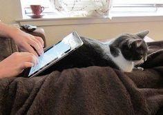 新しい iPad スタンドは、あらゆる過酷な環境下で、常に最適な操作環境を提供する事が可能です。