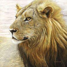 Edward Spera - Wildlife Artist - Braveheart - African Lion   natureartists.com