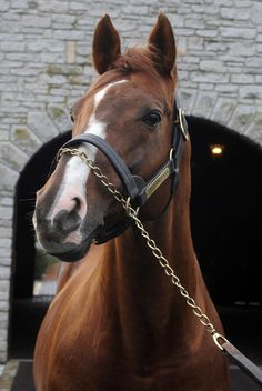 Giant's Causeway, the Cartier Horse of the Year of 2000, and 3-time leading sire in North America, he is a son of Storm Cat, grandson of Terlingua and great-grandson of Secretariat.