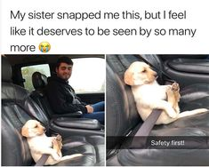 Funny Animal Meme Pictures That Make You Cry With Laughter - 21