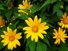 Hoa da quy - Vietnam  pystravel.com