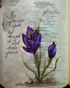 Today's Bible journal lead to a research of crocus flowers.  #biblejournaling #faithjournal #scripturejournal #scripture #biblejournalingcommunity #biblejournal #scriptureart #illustratedscripture #illustratedfaith #biblejournalinglife #noteworthytruth #soulscripts #shereadstruth #shepaintstruth #imprintedheart #biblestudymoments by a.neighbours