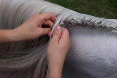 How to braid a horse's mane with a Spanish Braid (running braid). Great for show jumping