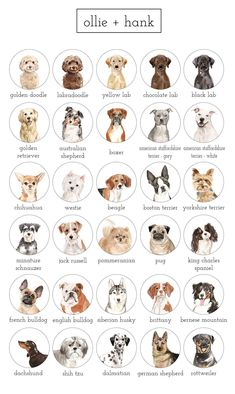 Shop Ollie + Hank for the perfect gift for your favourite dog lover. Our custom dog portrait is pers Cute Baby Dogs, Cute Dogs And Puppies, Dachshund Puppies, Doggies, Cute Little Animals, Cute Funny Animals, Dog Breeds Chart, Dog Breeds List Of, Custom Dog Portraits