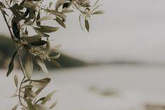 olive-tree-photo-print-photography-interior-fototryck-inredning-olivtrad-olive-branch-greece-parga-grekland-seos-fotografi.jpg