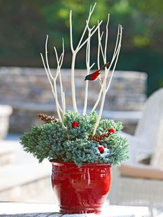 Festive red pot, insert shimmery red ornaments and natural pinecones into the greenery for a colorful impact. A faux-bird resting on a branch adds a bit of whimsy. Besides white, twigs painted silver or gold will twinkle in the winter light Best Outdoor Christmas Decorations, Christmas Greenery, Christmas Lights, All Things Christmas, Winter Christmas, Winter Holidays, Christmas Holidays, Red Ornaments, Ornaments Design