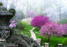 Dumbarton Oaks gardens (springtime), one of the most beautiful places in Washington, DC. At the top of Georgetown, next to Rock Creek Park, its gardens in any season refresh me. They unfold, space by space, with immense variety and unique beauties. Plus the Dumbarton Oaks museum houses a splendid collection; amazing meso-American wing.