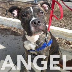 Angel is a sweet 1year old with happy tail that need a home ASAP. Meet her at 184 Verona St.