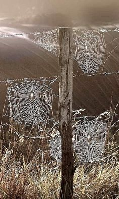Not a spider fan (although like some I do not freak out bc of them) but I have always thought their webs are beautiful when they have dew on them