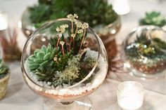 Succulent wedding centerpieces.