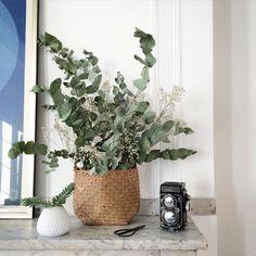 Un panier en osier rempli d'eucalyptus / Decoration