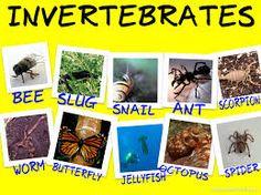 Image result for invertebrates pictures