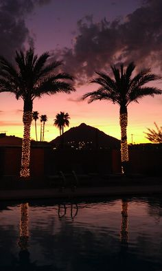 Scottsdale in the Winter. I always loved the lights on the palm trees. I will always want to go back.