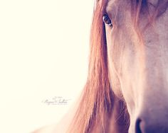 Horse photography Warlander horse fine art by RupaSutton on Etsy, $30.00